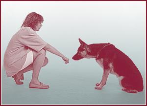 hond valt uit naar andere honden
