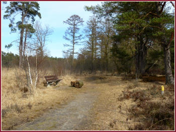 Wandeling Drents-Friese Wold