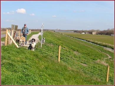 Omheind losloopgebied Hondendijk