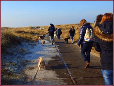 Hondenlosloopgebied Pettemerbos